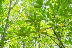 Árbol verde en el cielo prisen el ángulo Imagen de archivo