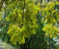Árbol verde en el día soleado en tiempo de primavera Imagenes de archivo