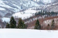 Árbol verde en el primero plano Mountain View del invierno en el amanecer, Imagenes de archivo