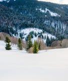 Árbol verde en el primero plano Mountain View del invierno en el amanecer, Fotografía de archivo
