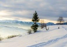 Árbol verde en el primero plano Mountain View del invierno en el amanecer, Foto de archivo libre de regalías