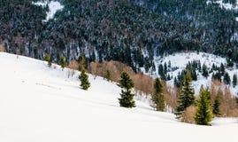 Árbol verde en el primero plano Mountain View del invierno en el amanecer, Foto de archivo