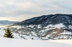Árbol verde en el primero plano Mountain View del invierno en el amanecer, Imágenes de archivo libres de regalías