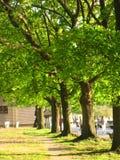 Árbol verde en fila Imagen de archivo libre de regalías