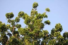 Árbol verde en fondo del cielo Foto de archivo libre de regalías
