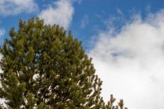 Árbol verde en fondo del cielo azul con las nubes Fotos de archivo libres de regalías