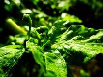 Árbol verde en la naturaleza Fotos de archivo libres de regalías