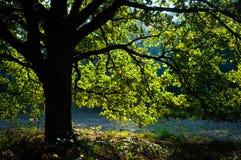 Árbol verde en otoño foto de archivo