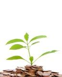 Árbol verde en pista del dinero Imagen de archivo libre de regalías