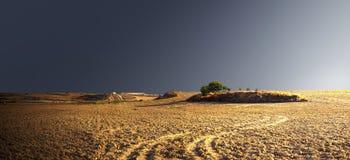 Árbol verde en una colina en el medio de un campo vacío Foto de archivo libre de regalías