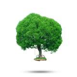 Árbol verde grande