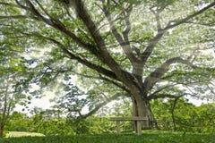 Árbol verde grande con el rayo del sol en la silla del parque y del público Fotos de archivo