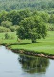 Árbol verde grande en el riverbank imagen de archivo libre de regalías