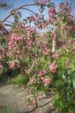 árbol verde hermoso con las flores rojas en un fondo del río y del jardín Foto de archivo