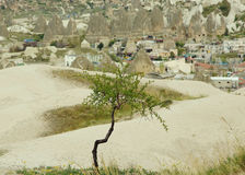 Árbol verde joven contra el pueblo de montaña Imagen de archivo