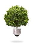 Árbol verde que crece hacia fuera de un bulbo Foto de archivo