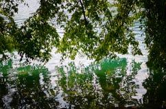 árbol verde que refleja en el agua, sangrada, Eslovenia Fotos de archivo libres de regalías