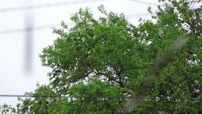 Árbol verde que se sacude en el viento almacen de metraje de vídeo