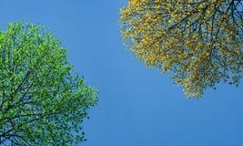 Árbol verde y amarillo Fotos de archivo