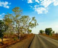 Árbol verde y cielo azul Imagen de archivo