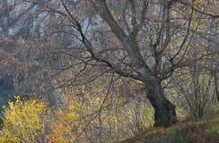 Árbol viejo Fotos de archivo