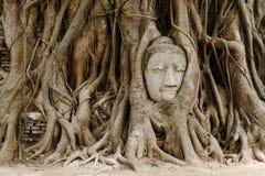 Árbol viejo con la cabeza de Buda Imágenes de archivo libres de regalías