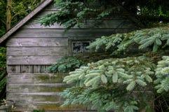 Árbol viejo de la cabina y de pino imagen de archivo libre de regalías