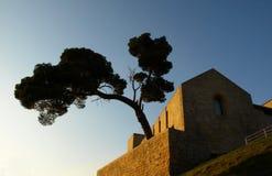 Árbol viejo de la ciudad Imagenes de archivo