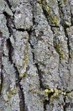 Árbol viejo de la piel del molde imagenes de archivo