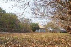 Árbol viejo del lilawadee Foto de archivo libre de regalías