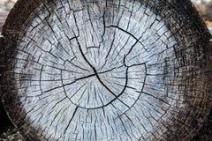 Árbol viejo del tocón fotografía de archivo