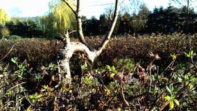 """Árbol viejo en el último otoño en el """"del â del prado – 2 imagenes de archivo"""