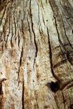 Árbol viejo en el bosque Imágenes de archivo libres de regalías