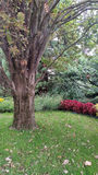 Árbol viejo en el parque Foto de archivo libre de regalías