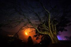 Árbol viejo en el pueblo de Bandipur y del incendio fuera de control Imagen de archivo libre de regalías