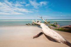 Árbol viejo en la playa con el cielo azul y una exposición larga Imágenes de archivo libres de regalías