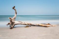 Árbol viejo en la playa con el cielo azul y una exposición larga Fotos de archivo libres de regalías