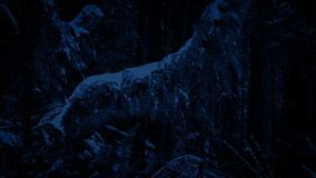 Árbol viejo en nevadas en la noche metrajes