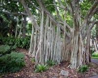 Árbol viejo en un parque Imagen de archivo