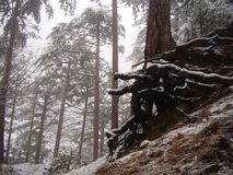 Árbol viejo en una cuesta de montaña Foto de archivo
