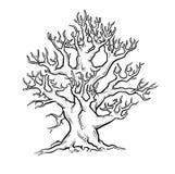 Árbol viejo grande. Fotos de archivo libres de regalías
