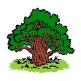 Árbol viejo grande Imagen de archivo libre de regalías