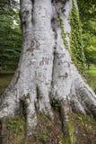 Árbol viejo grande con las letras inscritas en él Imagenes de archivo