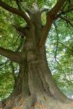 Árbol viejo majestuoso imagen de archivo libre de regalías