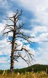 Árbol viejo, muerto bajo un cielo tempestuoso imagen de archivo