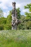 Árbol viejo nudoso que se coloca en el campo rodeado por las flores salvajes Imagenes de archivo