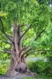 Árbol viejo por la charca imagenes de archivo