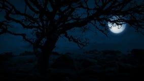 Árbol viejo torcido en cumbre con la luna detrás almacen de metraje de vídeo