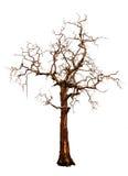 Árbol viejo y muerto aislado Imagenes de archivo
