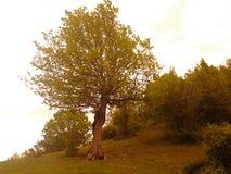 Árbol y árboles Imagenes de archivo